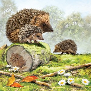 Otter House 1000 - Hedgehog Family