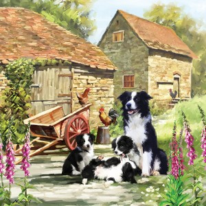 Otter House 1000 - Border Collie Barn