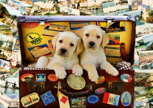 BlueBird Puzzle 1000 - Two Travel Puppies