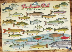 Cobble Hill 1000 - Freshwater Fish of North America
