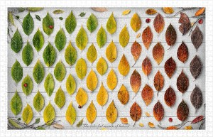 Pintoo 1000 Plastic Puzzle - The Colorful Season of Leaves
