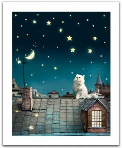 Pintoo  500 Plastic Puzzle - Kitten in the moonlight