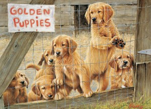 Cobble Hill / Outset Media  500 XXL Pieces - Golden Puppies
