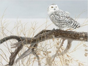 Cobble Hill / Outset Media  500 XXL Pieces - Fallen Willow Snowy Owl