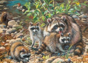 Cobble Hill / Outset Media  350 XXL Pieces - Raccoon Family