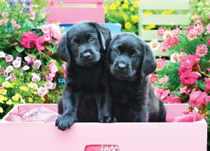 Eurographics 500 XXL - Black Labs in Pink Box