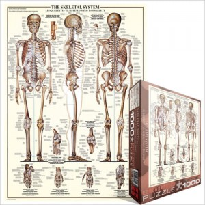 Eurographics 1000 - The Skeletal System