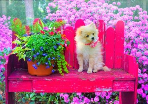 BlueBird 500 - Puppy in the Colorful Garden