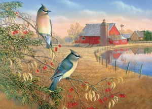 Cobble Hill 1000 - Cedar Waxwings