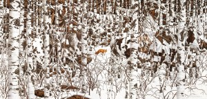SunsOut 1000 - Bev Doolittle - Woodland Encounter