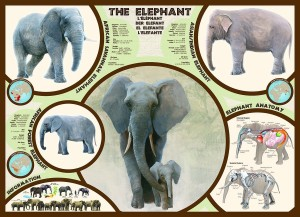 Eurographics 1000 - The elephant